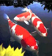 Dr oliver hochwartner fachtierarzt f r fische links for Zierfische hannover